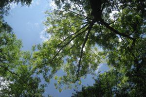 Arborist Solutions