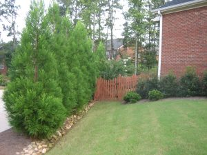 Water Drainage Solutions Landscaping - McPlants, B0000050