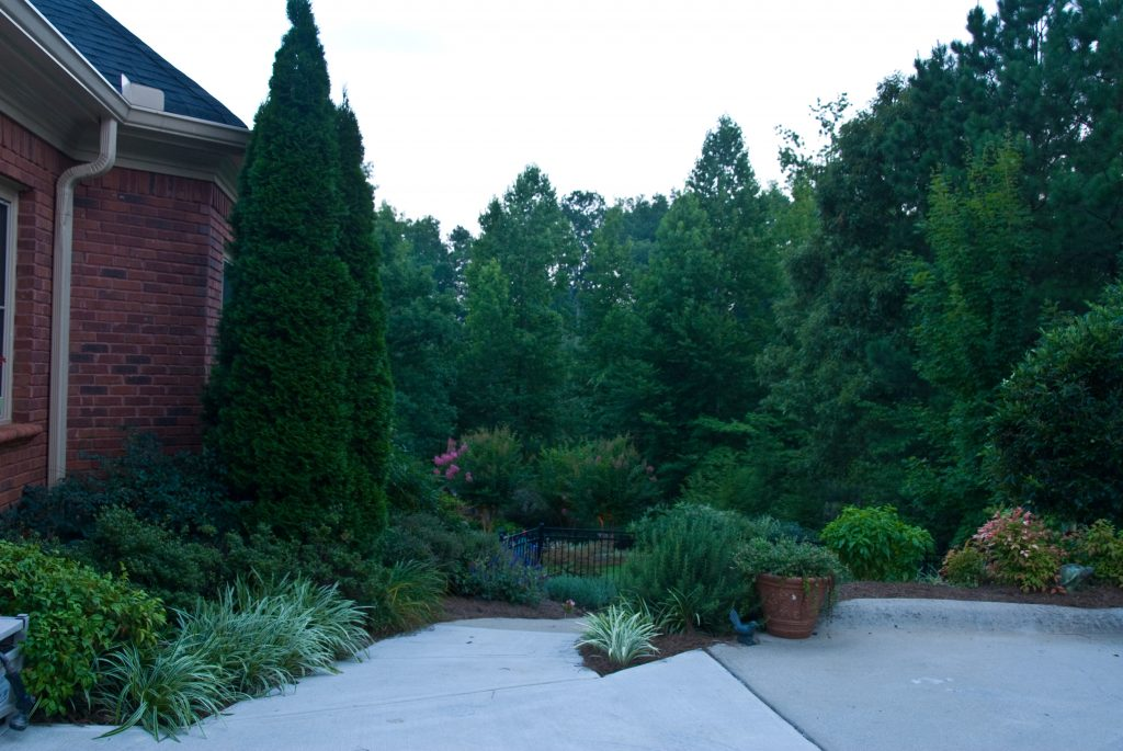 pruning landscape trees and shrubs