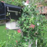 Garden Structures Arbor Trellis Gazebo Pergola