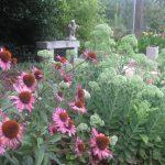 perennial flowers installation - McPlants, IMG_2391