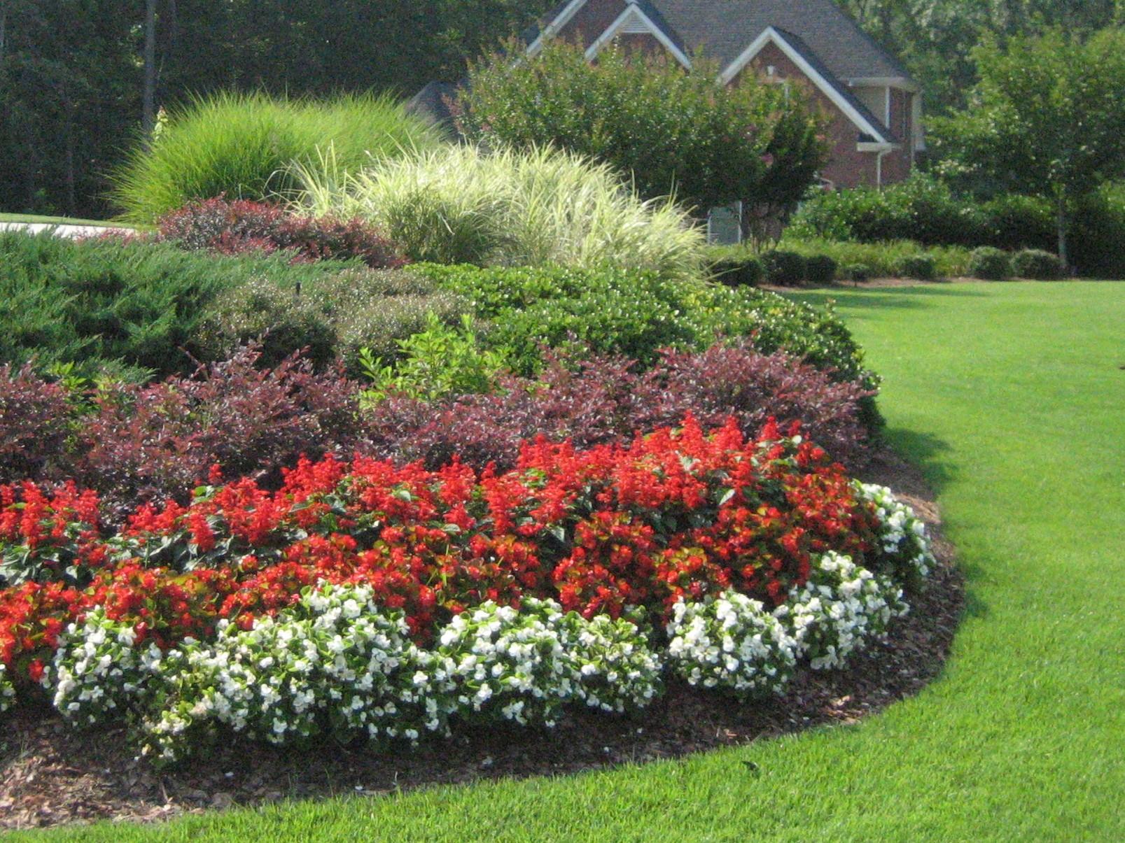 Seasonal Color Plants Mcplants