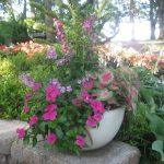 seasonal color plants McPlants, IMG_9757