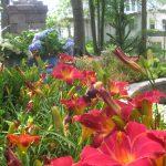 perennial flowers installation - McPlants, IMG_9806