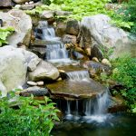 water features installation McPlants, -7871