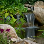 water features installation McPlants, -7879