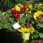 seasonal color plants McPlants, IMG_0823