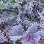 seasonal color plants McPlants, IMG_0833