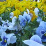 seasonal color plants McPlants, IMG_0834