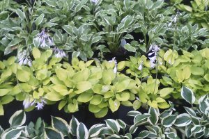 Select The Right Plant for Success