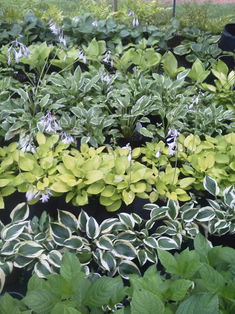 how to choose the right plants for your landscape - McPlants