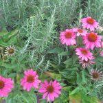 perennial flowers installation - McPlants, IMG_2236