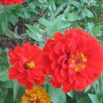seasonal color plants McPlants, IMG_3466