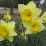 perennial flowers installation - McPlants, IMG_4399
