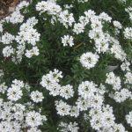 perennial flowers installation - McPlants, IMG_4404