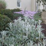 perennial flowers installation - McPlants, IMG_6102