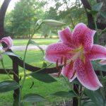 perennial flowers installation - McPlants, IMG_6695
