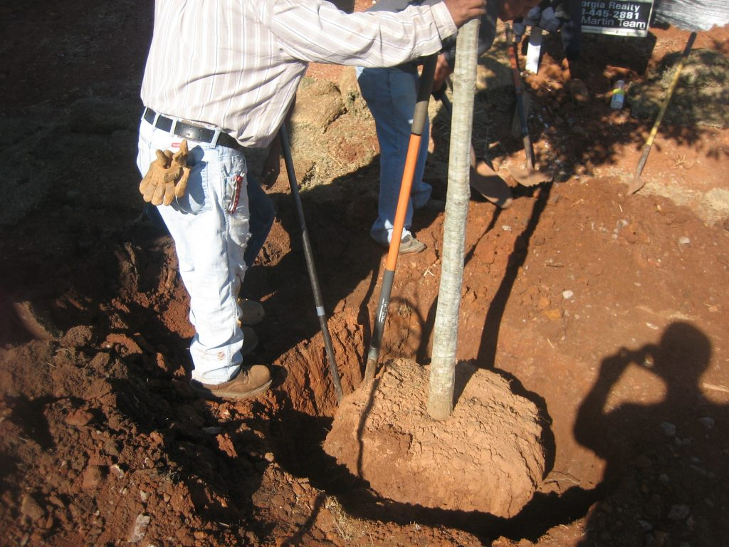 planting and transplanting landscape trees and shrubs