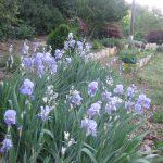 perennial flowers installation - McPlants, IMG_9282