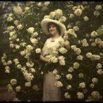 Penny McHenry Hydrangea Festival's Madame