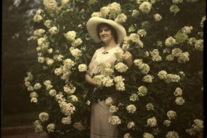 Penny McHenry Hydrangea Festival's Madame