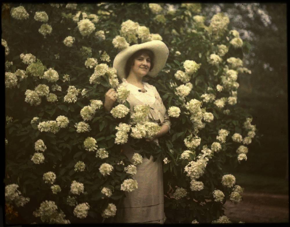 Penny McHenry Hydrangea Festival