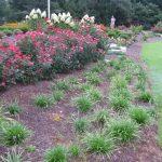 Freedom Island Landscape Garden Mcplants